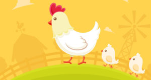 chicken-farm-animal-poultry
