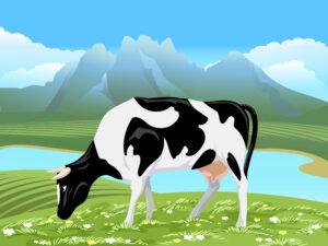 A2 Milk share price